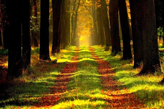 lesní cesta.jpg
